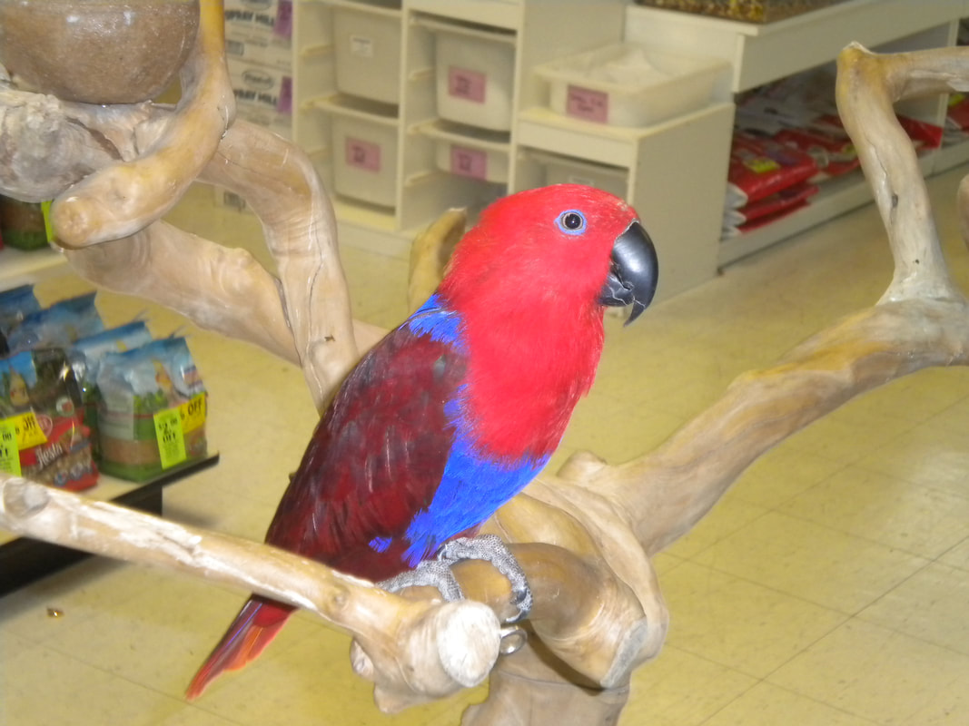Discount Pet & Supplies - Home